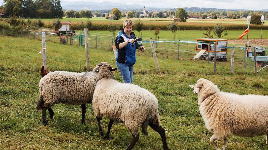 Eine Frau steht auf einer Wiese. Sie ist umringt von drei Schafen, in der Hand hält sie einen Futterbehälter. Im Hintergrund ist eine eingezäunte Weide zu sehen. In der Ferne sind Häuser sichtbar.