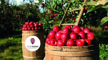 Zwei übervolle Holzfässer mit roten Äpfeln vor Apfelbäumen und einer Leiter angelehnt an einen Apfelbaum als Symbolbild für die üppige Apfelernte. Auf einer Holztonne ist das Logo vom Tag der Regionen