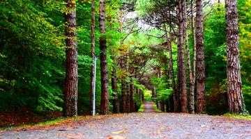 Ein Asphaltweg im Mischwald, links und rechts Bäume. Etwas Laub liegt auf dem Weg.